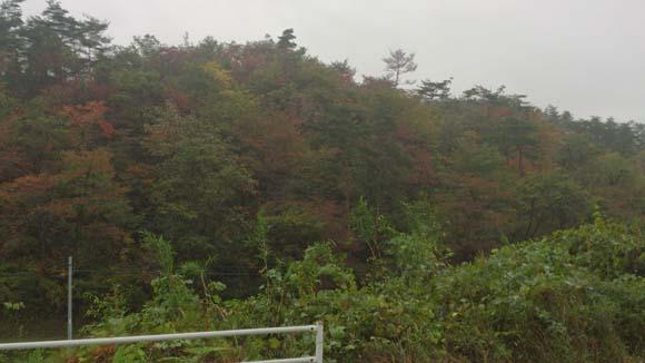 オカマ声と秋の空ときれいな紅葉